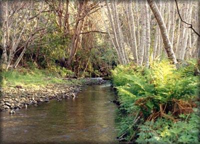 View of Creek that runs through property