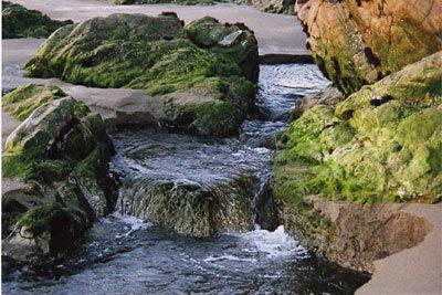 Creek runs into the Sea