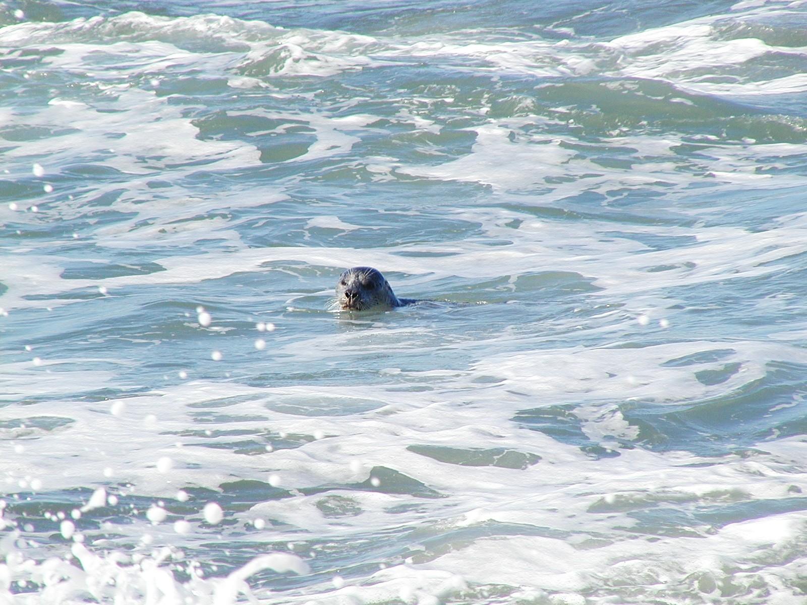 Seals in Ocean